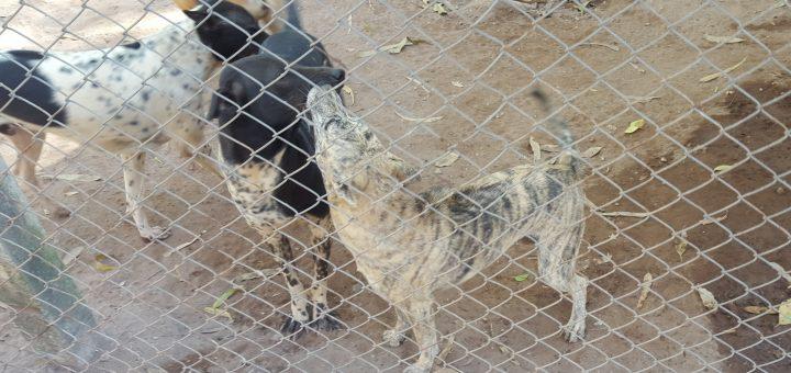 Hundar på Dog Rescue