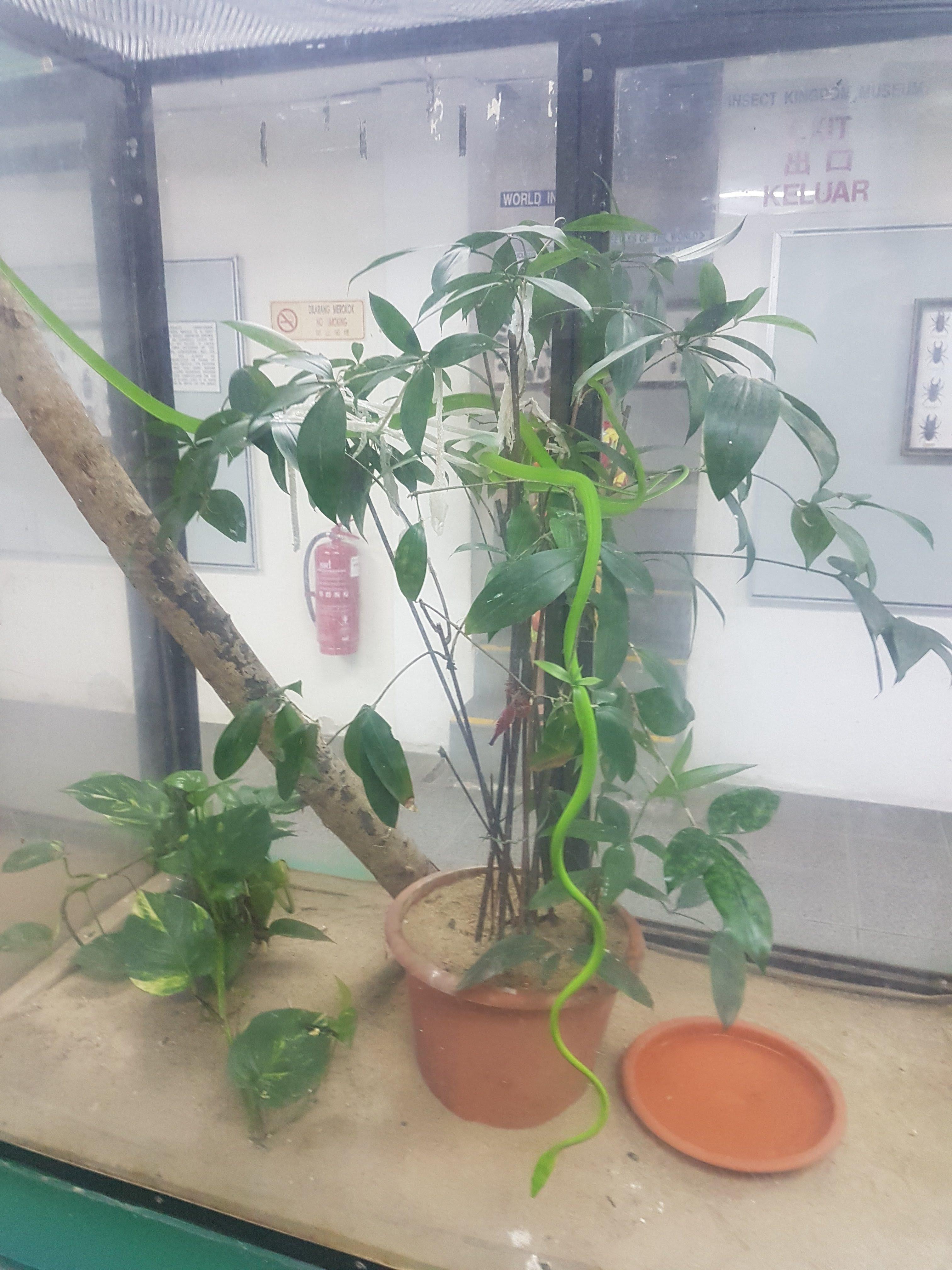 Orm i terrarium
